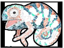 Little-Chameleon1